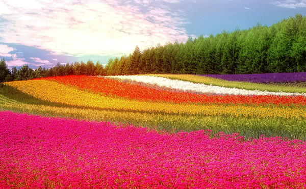 Field of colorful flowers and trees in the background